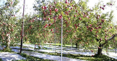 他人のリンゴは赤い?(24.11.1)