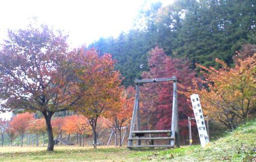 五色桜の紅葉(24.11.6)