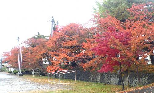 西小学校の桜たち(24.11.10)