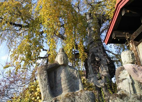 隆谷寺のしだれ桜(樹齢役400年)と石仏(24.11.10)