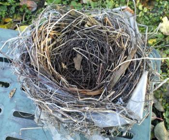小鳥の巣(24.11.25)