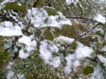 リンゴの葉も寒そう(24.12.1)