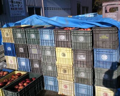 小屋の外に積んだリンゴ(24.12.6)