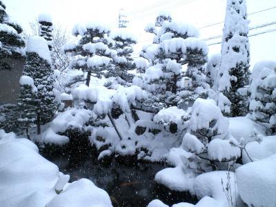10日朝の庭(24.12.10)