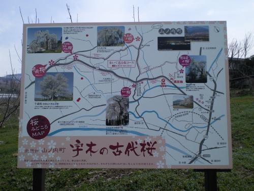 古代桜めぐりコース案内看板