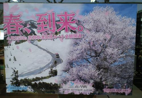 雪の回廊と千歳桜ポスター(24年度版)