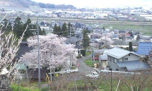 宇木区内は桜でいっぱい(24.4.27)