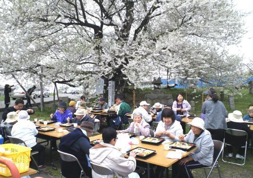 千歳桜の前でお花見会(24.4.27)