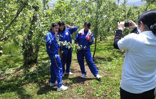 リンゴ摘果の3人娘(24.5.23)