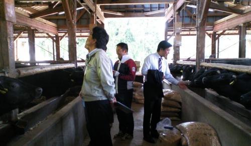 牛舎の中を見学(24.5.24)