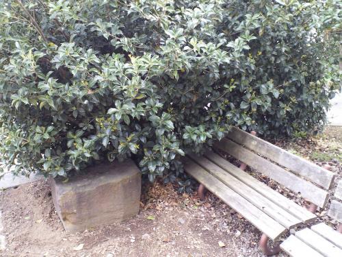 町施設庭のベンチ(24.5.29)