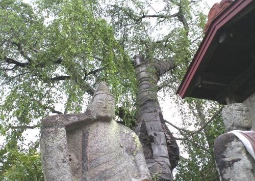 石仏としだれ桜(24.6.1)
