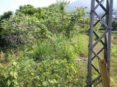 鉄橋から赤岩駅方向を望む(24.6.4)