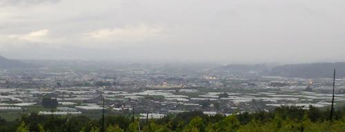 中野市のビニール畑(24.7.1)