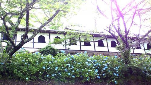 紫陽花の谷厳寺(24.7.2)
