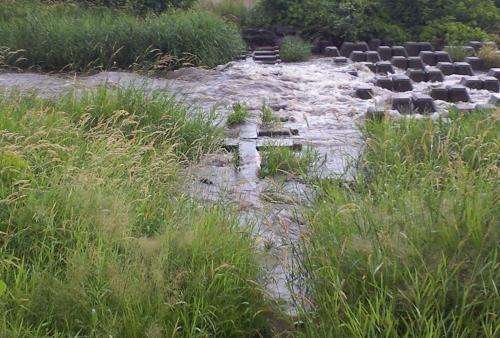 徐々に冠水する川原橋(24.7.7)