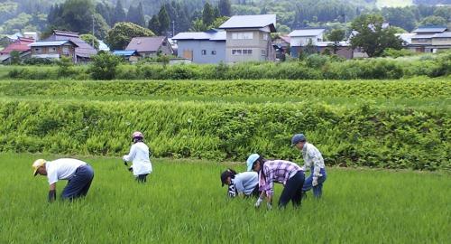 田んぼの草取り作業(24.7.19)