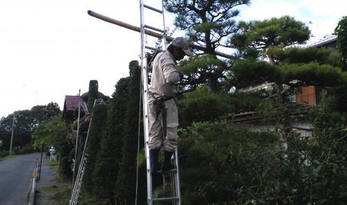 庭木の剪定作業(24.9.7)