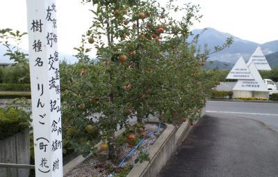 記念植樹のシナノスイート(24.9.28)