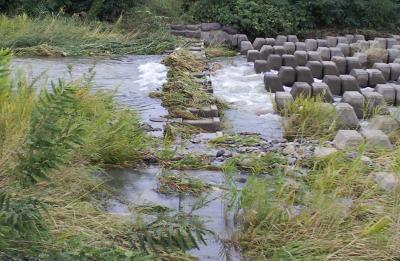 河原橋(千歳橋)にも増水の跡(24.10.1)