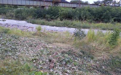 長電鉄橋下流に増水の跡(24.10.1)