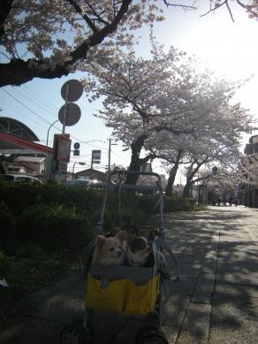 2012花見3