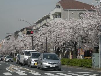 2012花見4