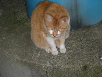 目つき悪い猫