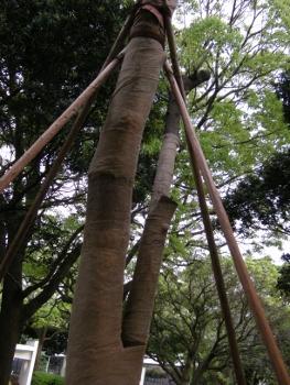 骨折した木2