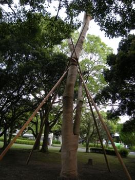 骨折した木