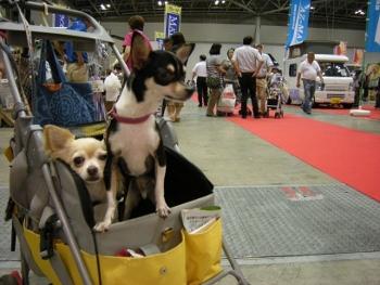 2012東京キャンカーショー2