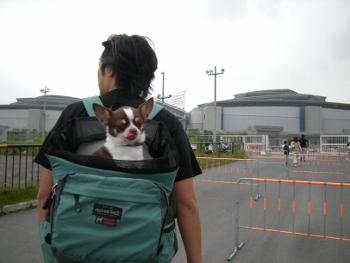 2012東京キャンカーショー1