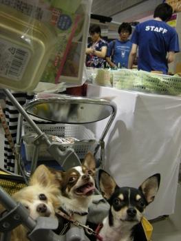 2012東京キャンカーショー8