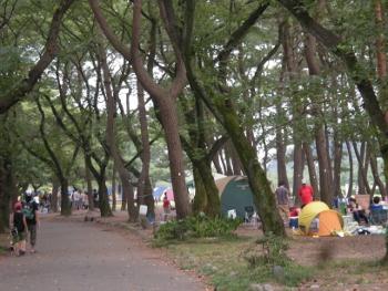 相模川自然村1