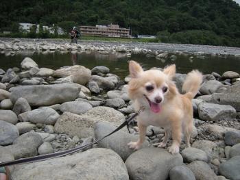 相模川自然村5