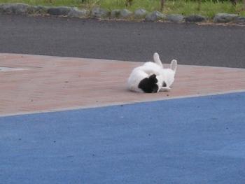 ゴロン猫1