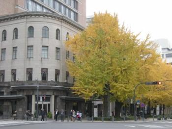 日本大通り銀杏並木4