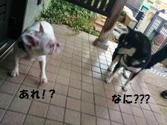 DSC_0109_convert_20131209170119[1]
