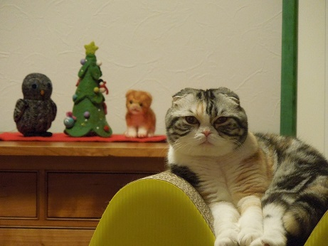 もうしゅぐクリスマスでしゅね