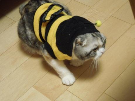 ミツバチしゃんの衣装でしゅ