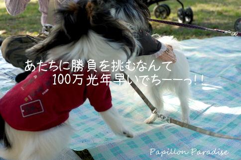 2010110316.jpg