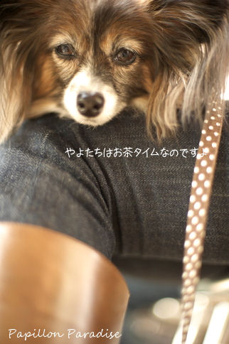 2010110332.jpg