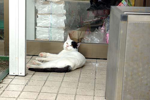 白黒モノクロの猫