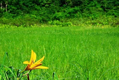 籾糠山 天生湿原とニッコウキスゲ
