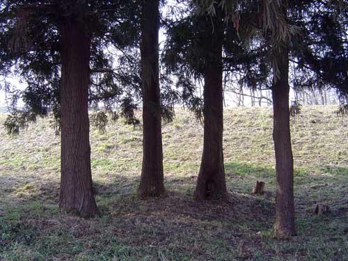 正面から見てみる~3-樹