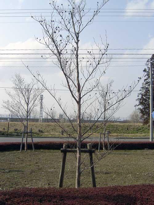 正面から見てみる~3-樹2