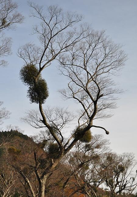 201012_amagi_11.jpg