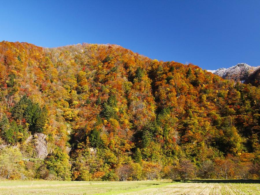 五箇山の里の紅葉