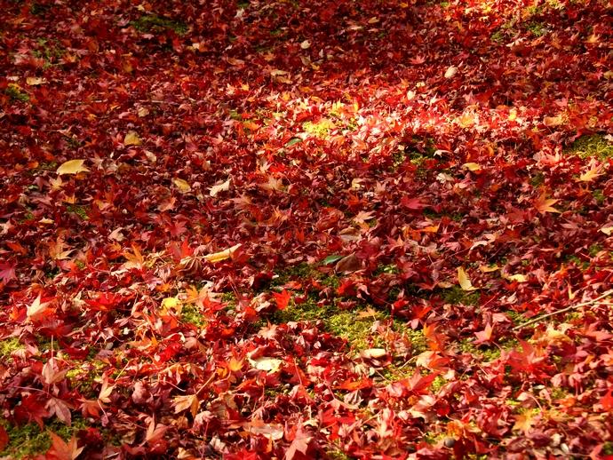 那谷寺の散り紅葉