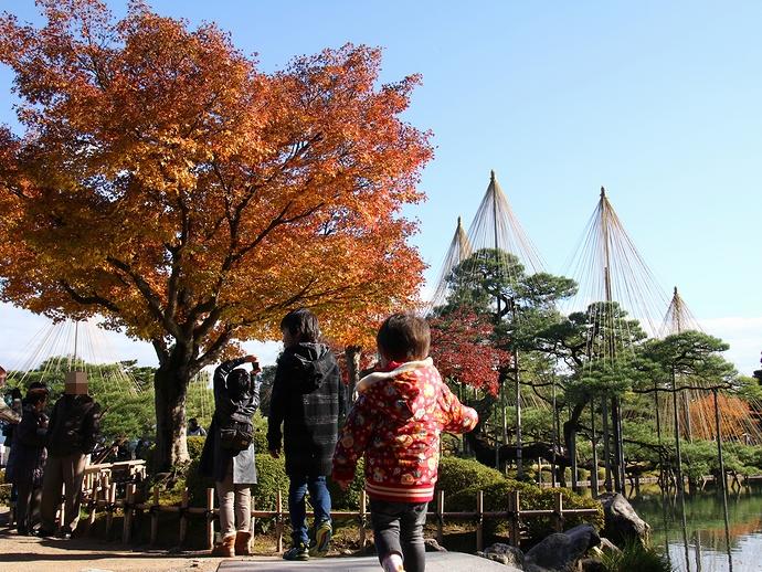 虹橋から見た雪吊りと紅葉 金沢兼六園